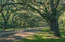 Oaks Plantations de Georgia y South Carolina, sur de EE.UU.