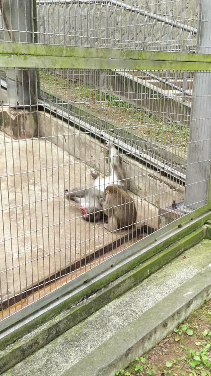 足羽山公園遊園地 - メイン写真: