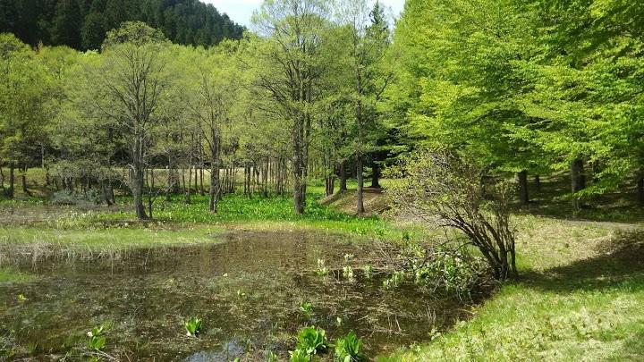 県民の森 - メイン写真: