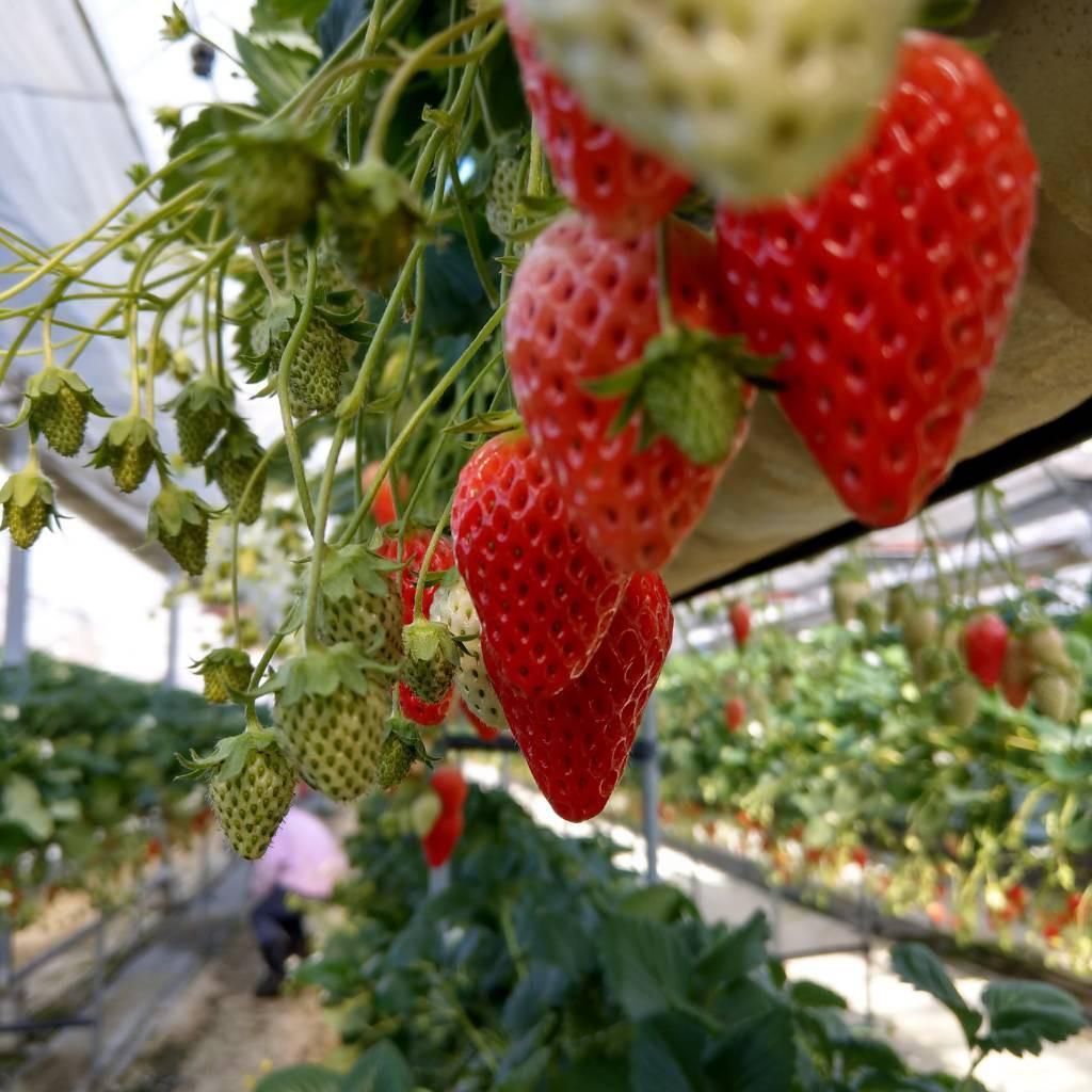 長野県 観光農園ランキングTOP10