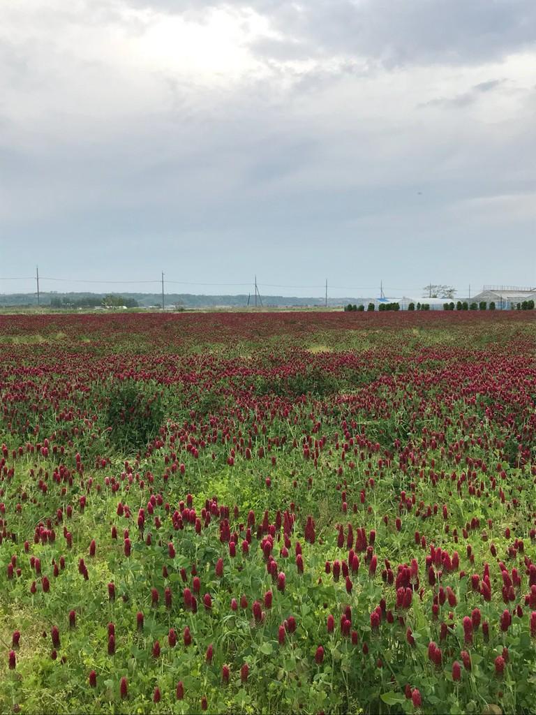 石川県 観光農園ランキングTOP4