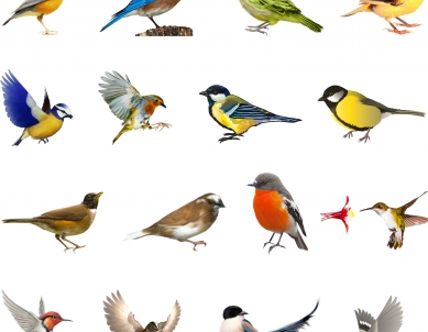 Colorful Natural Birds – Big Size Switchboard Sticker