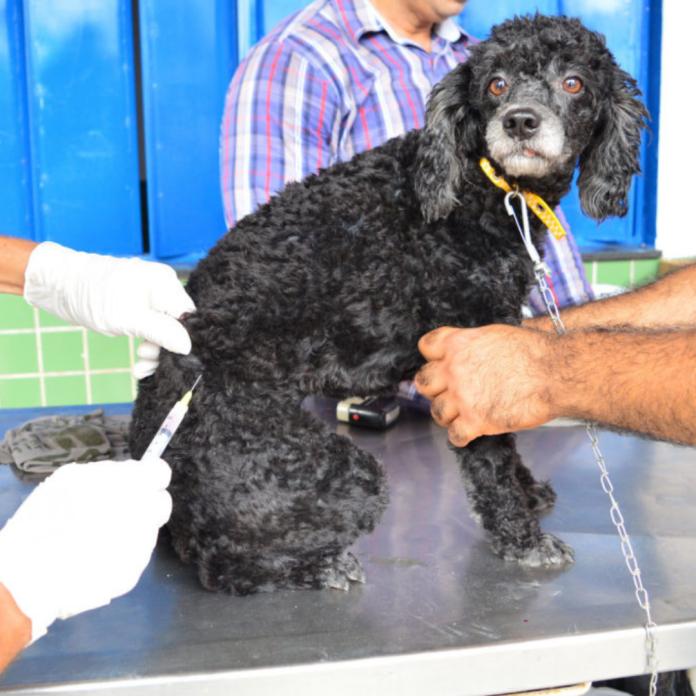 Continua vacinação contra raiva para cães e gatos em Imperatriz