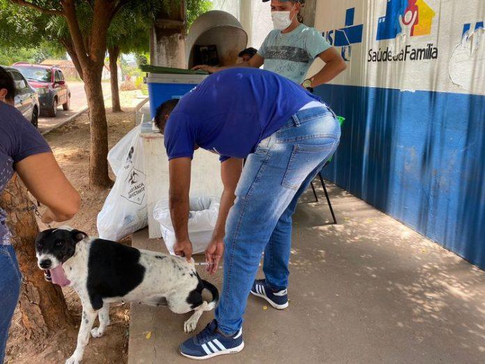 Vacinação contra a raiva para cães e gatos continua neste sábado