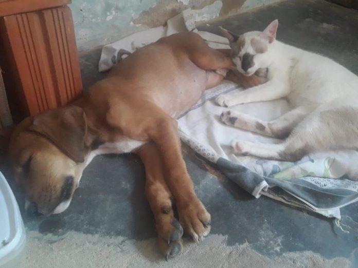 Imperatriz tem 37 mil cães e gatos domésticos, fora os animais de rua, segundo IBGE