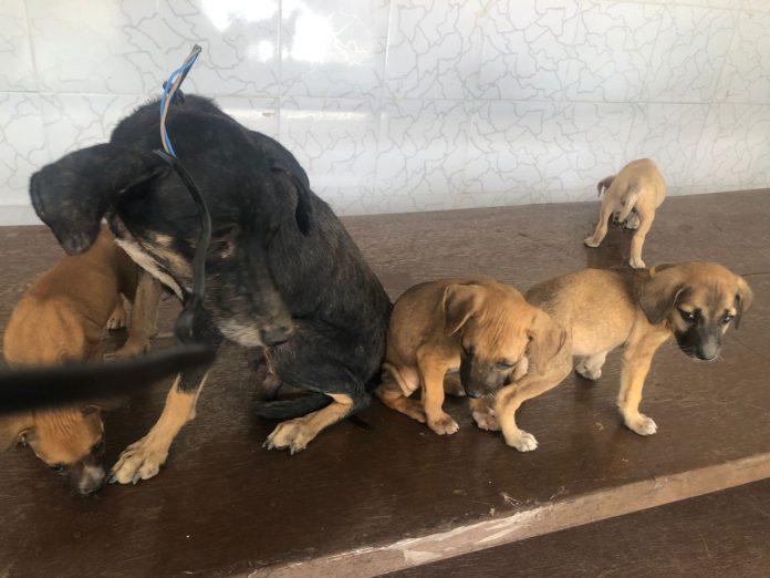 Polícia resgata cadela e filhotes em situação de maus-tratos