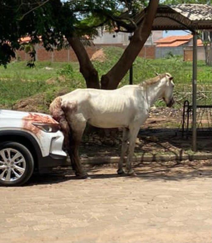 Cavalo ferido está solto pelas ruas do bairro Nova Imperatriz