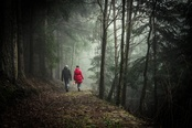 Boss-fight-free-high-quality-stock-images-photos-photography-couple-walking-woods-forest_(1)