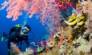 Underwater-world-ocean-seabed-diver-barrier-reef-with-coral-colored-fish-desktophd-wallpaper-1280x768