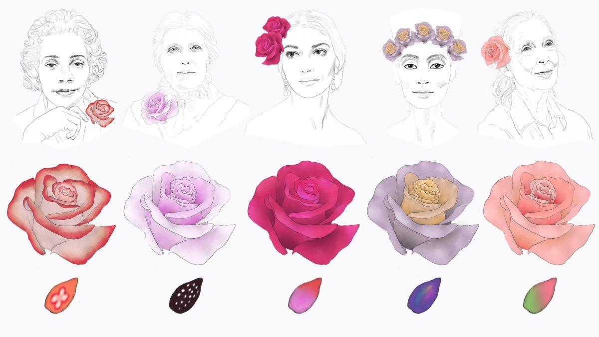 concept art for Rosas's Garden