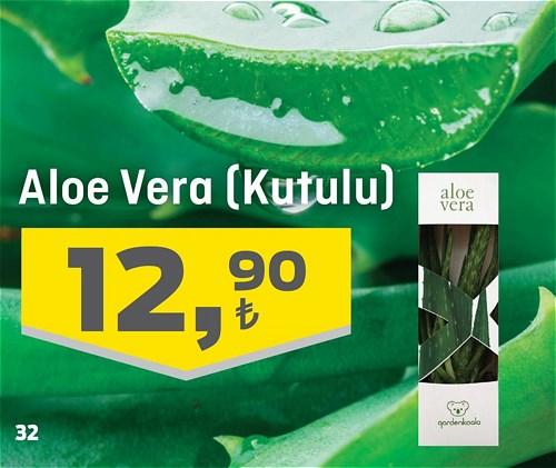 Aloe Vera (Kutulu) image