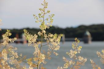 狭山湖#385628
