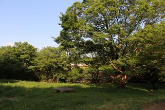 八国山緑地ほっこり広場#385828
