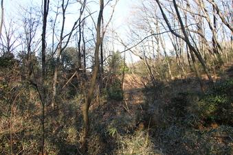 和幸の森#385885