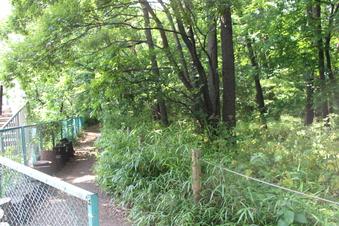 淵の森緑地#386174
