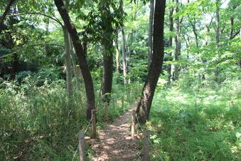 淵の森緑地#386184