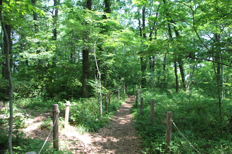 淵の森緑地#386188