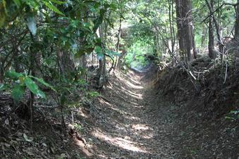 木のトンネル#386201