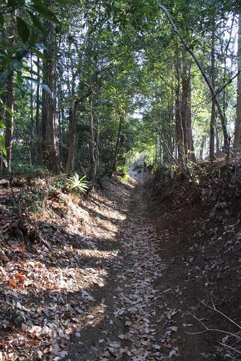 木のトンネル#386208