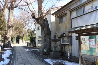 所沢神明社のケヤキNo2