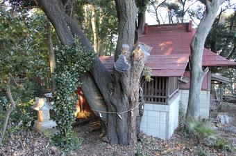 山之神神社のヤマザクラ