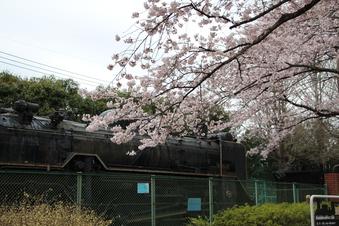 小手指公園の桜#387110