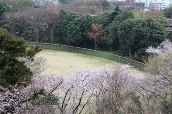 滝の城址公園の桜#387042