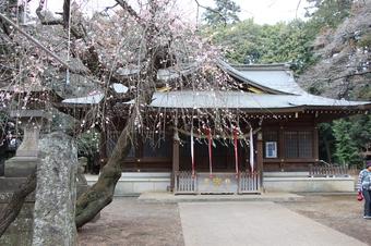 北野天神社の梅
