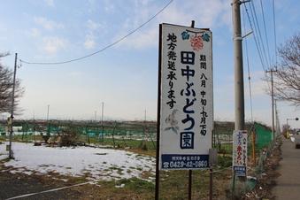 田中ぶどう・田中栗園#390362