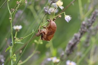 昆虫コレクション#390204