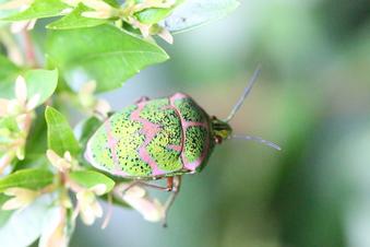 昆虫コレクション#390046