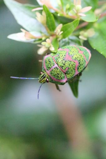 昆虫コレクション#390047