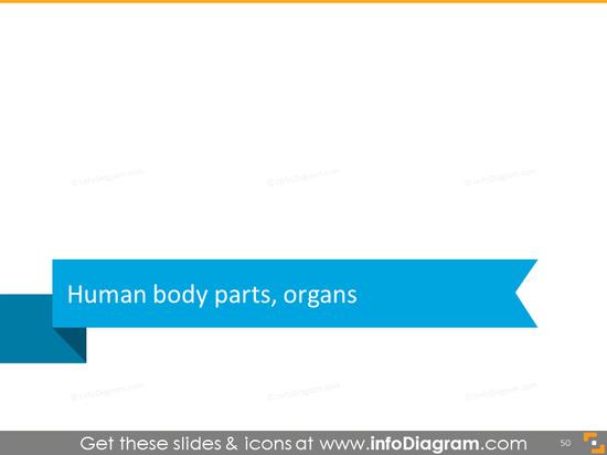 Human body part organ