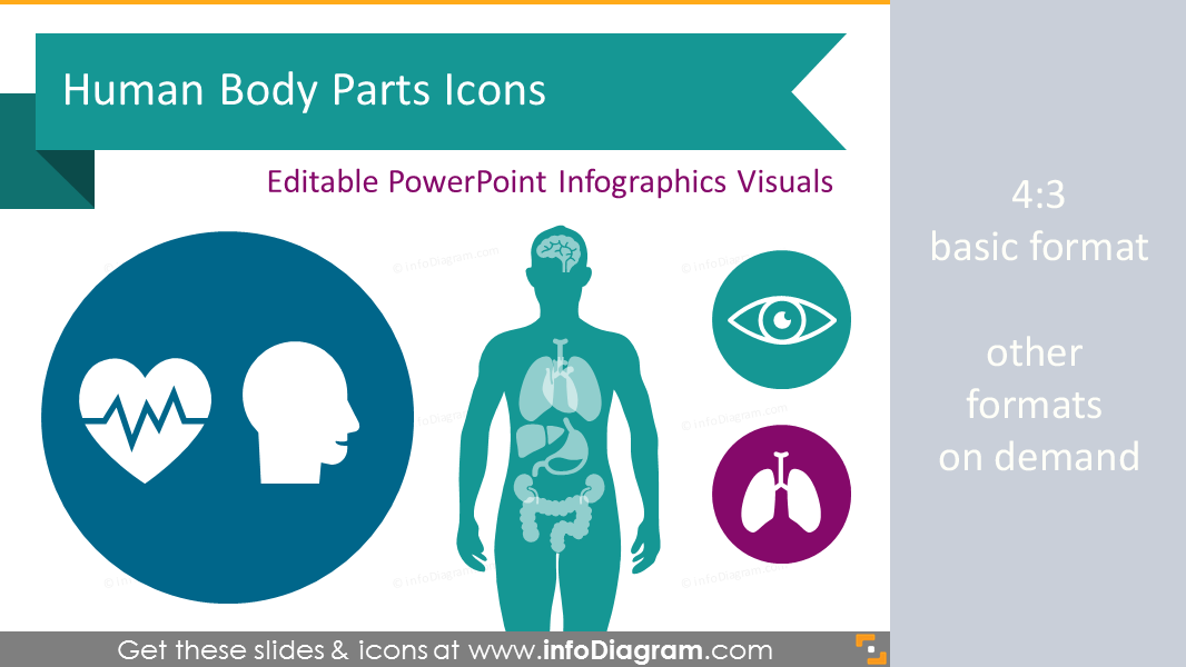 Creative vector visuals with with rich content for your