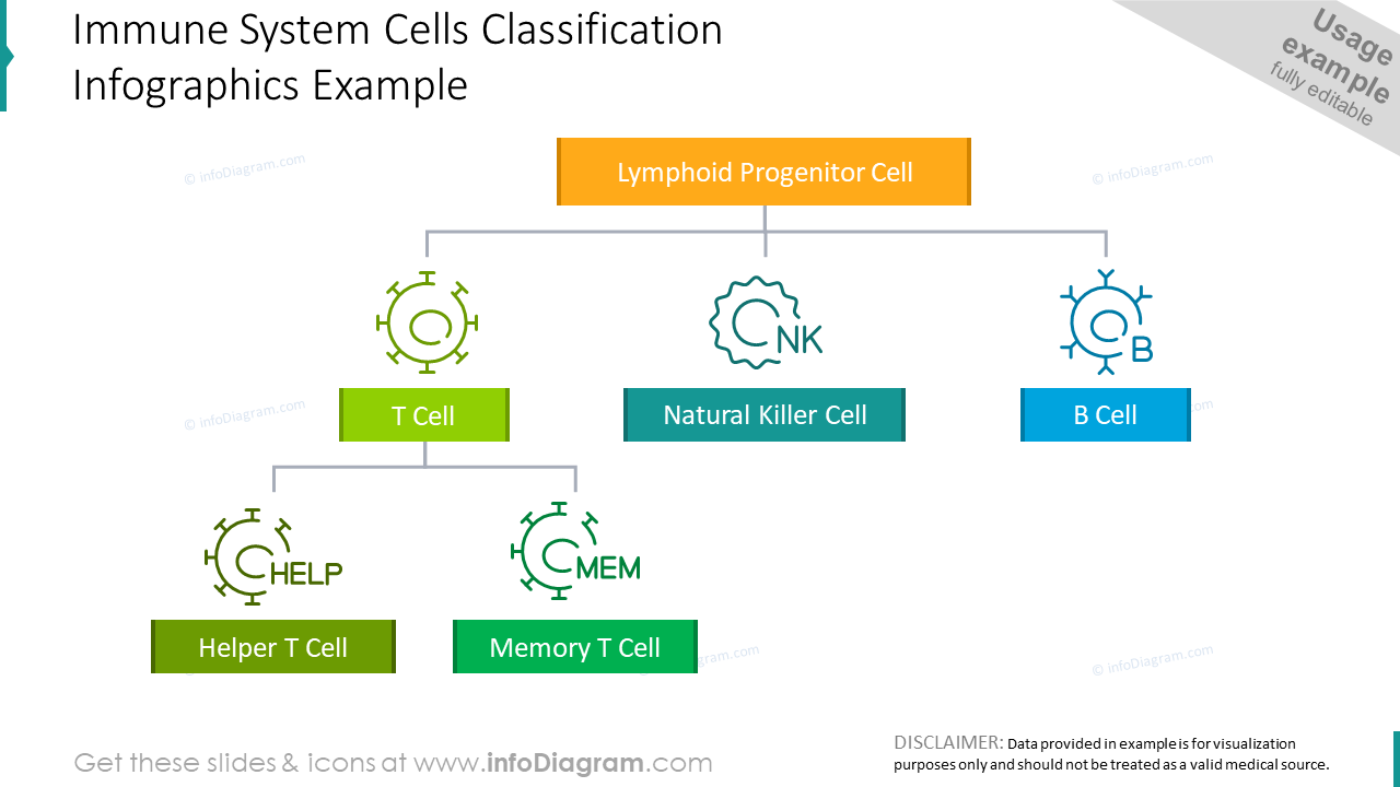 Immune system cells classification example