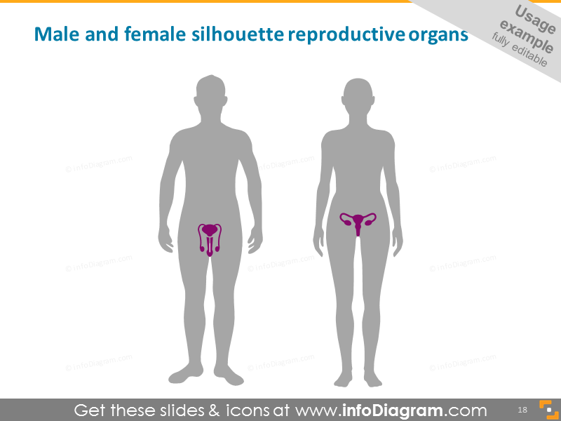 Male and Female Silhouette with Reproductive Organs