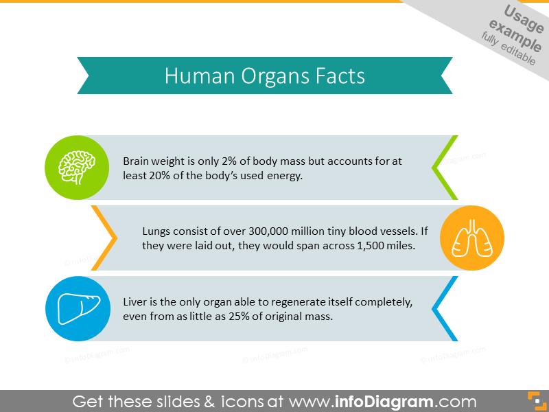 Humans organs facts creative list