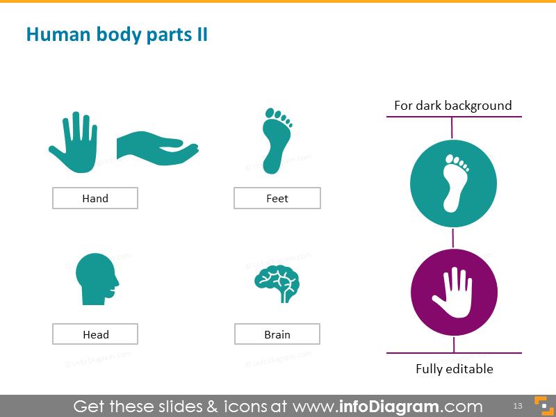 Human Body Parts