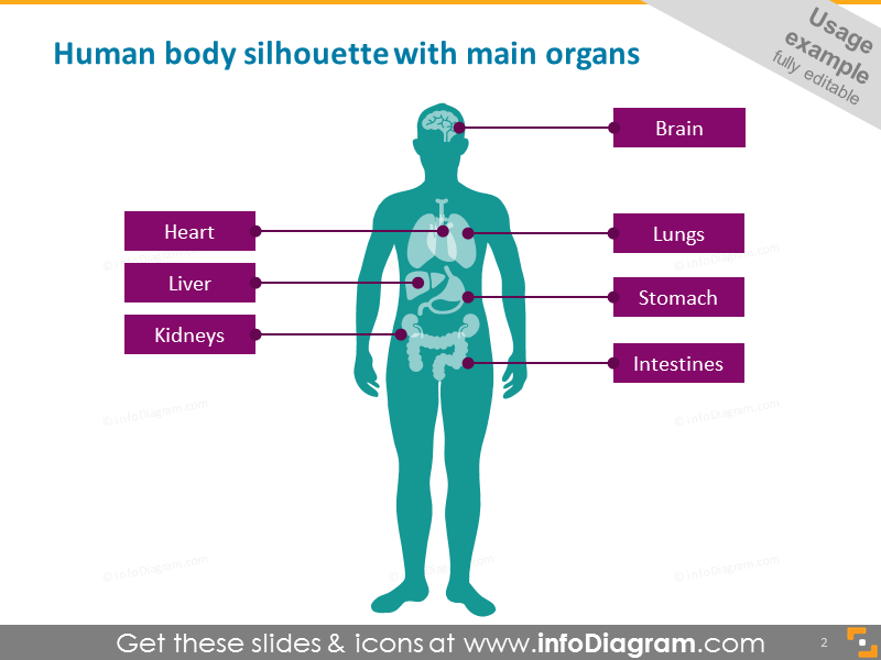 Infographics Human Body Parts Organ Medical Male Female