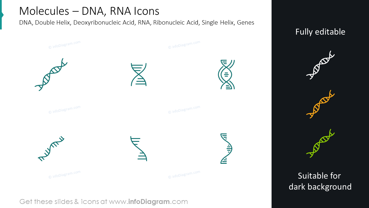 Molecules icons: DNA, RNA, double helix