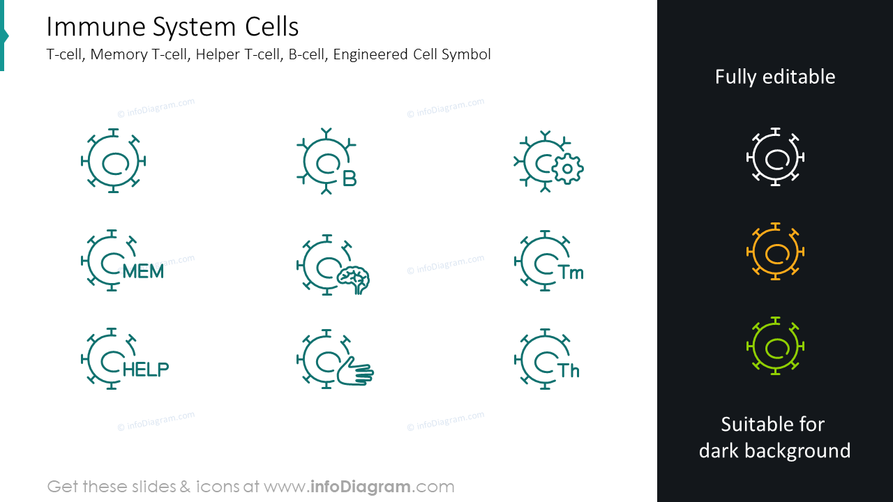 Immune system cells: T-cell, memory T-cell, helper T-cell