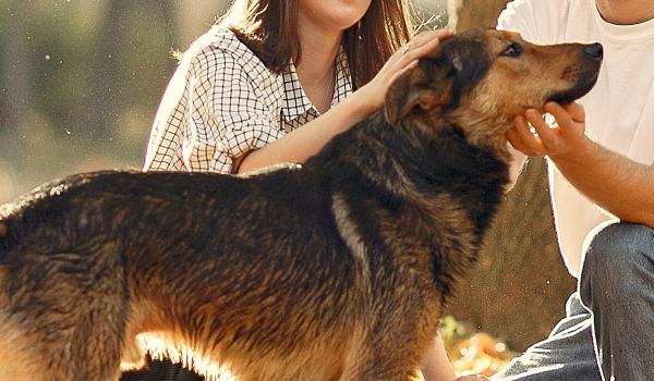 Generació R.  Activitats assistides amb gossos