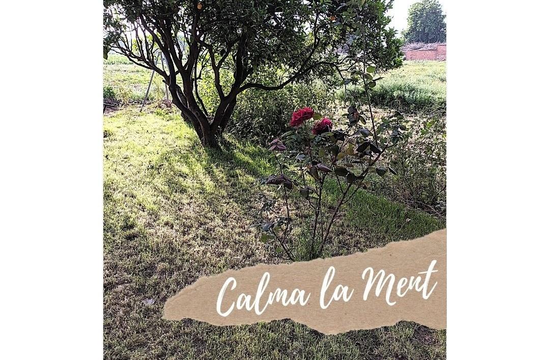 """MEDITACIÓ """"CALMA LA MENT"""""""