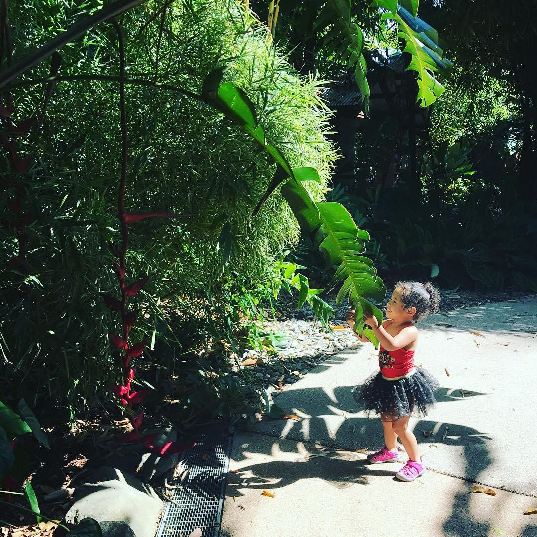 Carins Botanic Gardens guide
