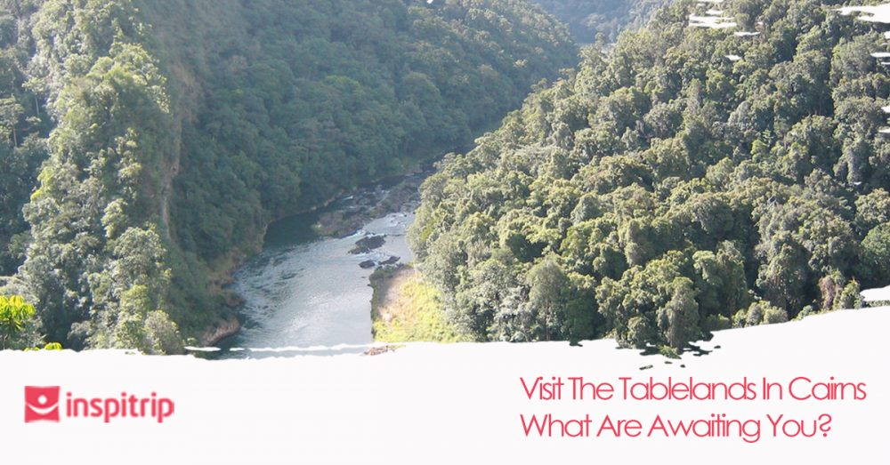 Visit The Tablelands In Cairns: What Are Awaiting You?