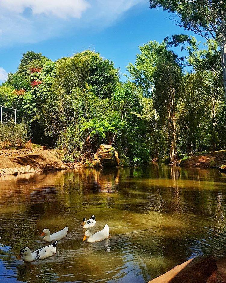 platypus park
