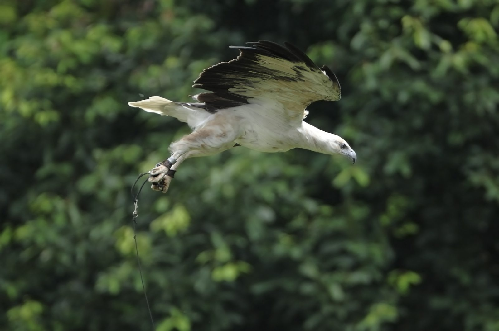 Birds of prey in Jurong Bird Park