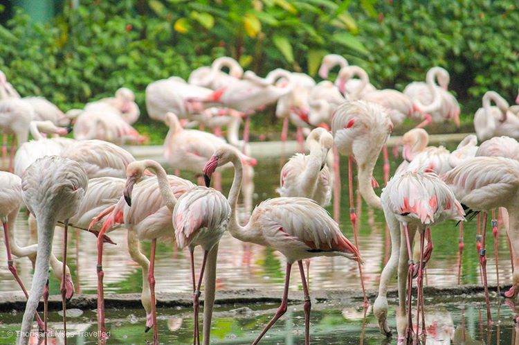 Jurong Bird Park: A Detailed Guide to Asia's Largest Bird