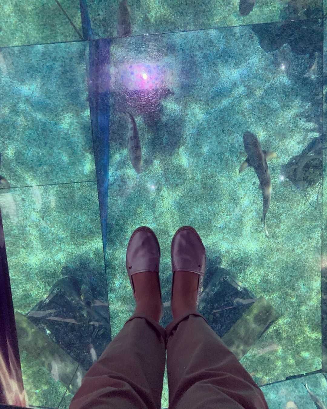 Shark Walk zone in Sea Life Bangkok