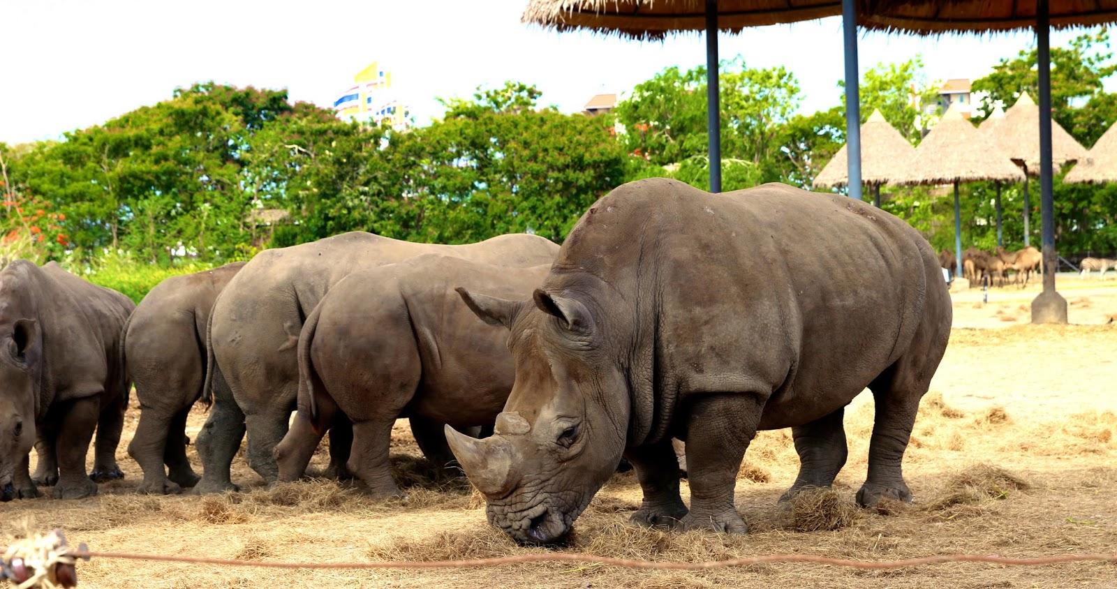 Rhinos at Safari World Bangkok